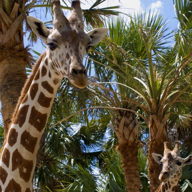 Naples Zoo, Naples FL #mskproperties www.MSKProperties.US