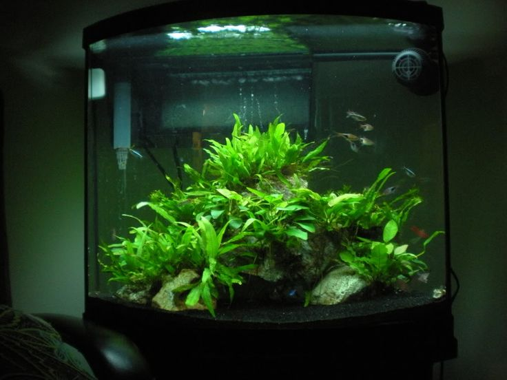 26 gallon bow front aquarium google search special for Bow front fish tank