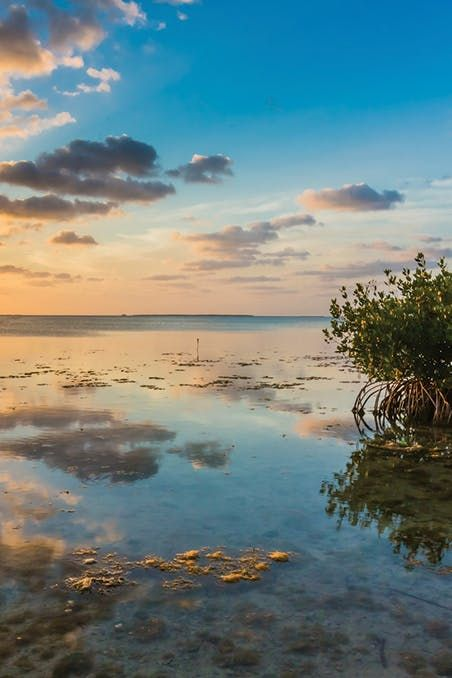 "Key Largo, FL - ""the diving capital of the world!"" The 25 Most Photogenic (and Breathtaking) Spots in America via @PureWow"