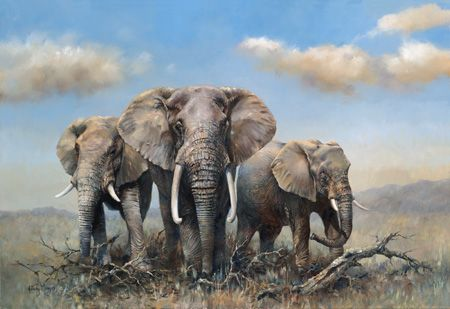 Elephants, world wildlife