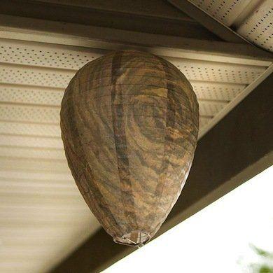 Natural Way To Kill Wasp Nests