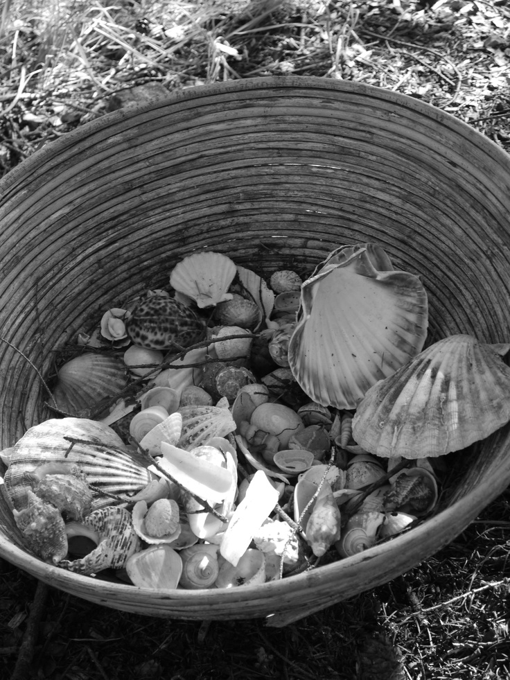 This was a picture taken in our very own sensory garden in the Nature Nurture woods. There are hundreds of sea shells collected in this amazing basket for the children to play with and enjoy.