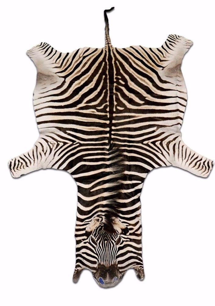 Details About Real Zebra Skin Rug Size 8 X 6 Ft Burchellu0027s Hide Perfect Quality