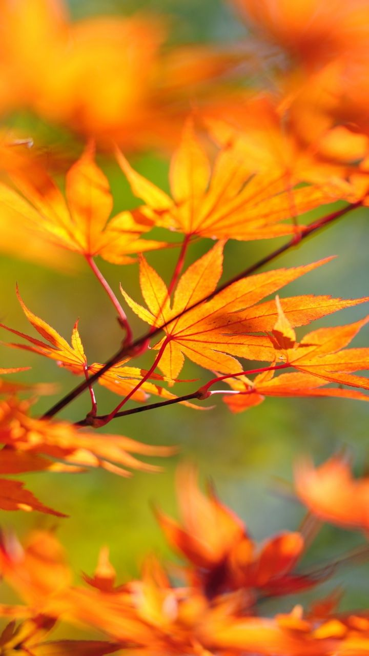 Картинки на смартфон осень
