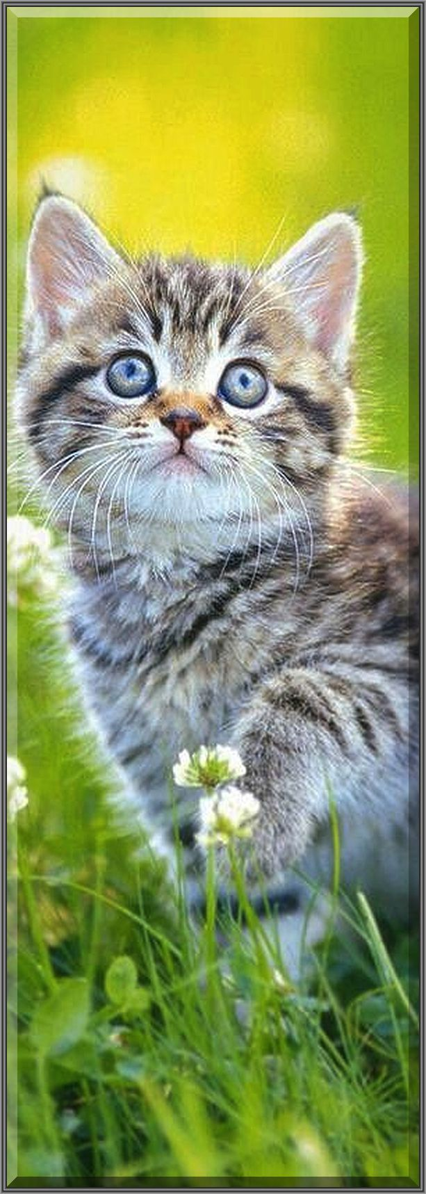 BEAUTIFUL KITTY  #cat cute funny #Gepinnt von: Lika Yuna cat Urasoe