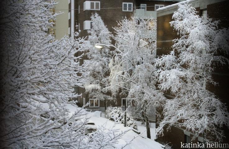 outside my window, january 2013.