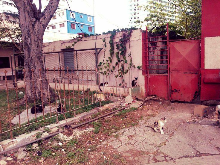 6 Katzen die auf die Fütterung warten - gesehen in Vedado Havanna