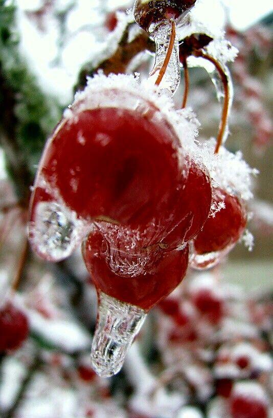 Les 44 meilleures images du tableau violettes fleurs - Le petit jardin winter garden lyrics toulouse ...