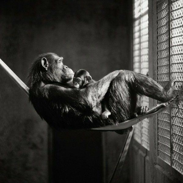 animaux-photographie-noir-et-blanc-singe-maman-et-enfant