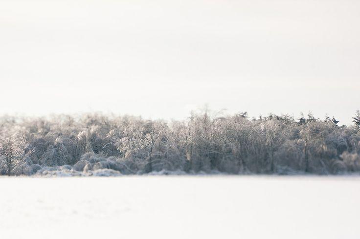 Winter Weary / fiveonenine / sylvia mioduszewska