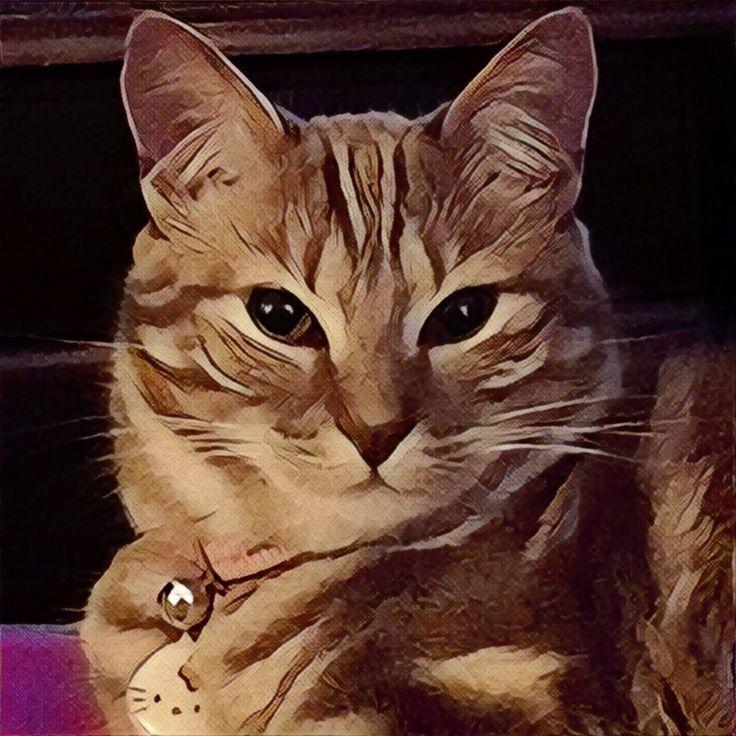 My Cat 🐱