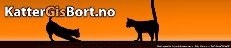 Lønaas Kattepensjonat – for din katt! http://www.kattergisbort.no/2013/06/29/lonaas-kattepensjonat-for-din-katt/ #katt #kattepensjonat #pensjonat #ferie #reise #dyrehold #dyr