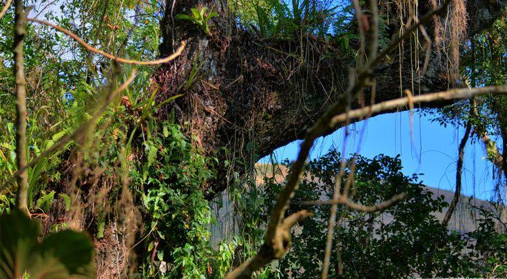 Large tree and vegetation