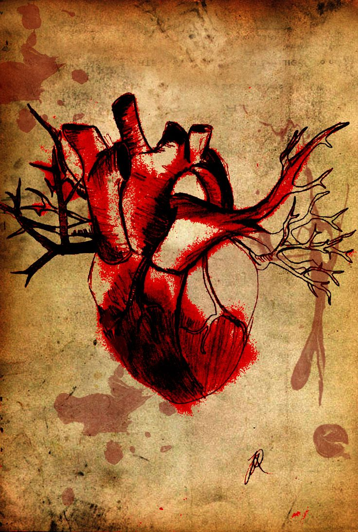 the 25+ best ideas about human heart drawing on pinterest | human, Muscles