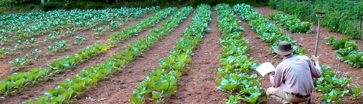 Redeeming the Dirt Blog  Encouraging Born Again Farmers to Pursue God-glorifying Agriculture