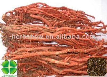Salvia Miltiorrhiza Seeds for Sale