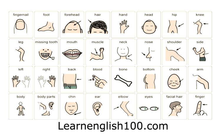 تحميل كتاب لغة العيون وتعابير الوجه pdf