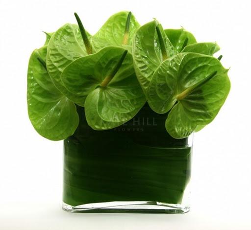 Green Ti Leaf wrapped Vase with midori   anthirium