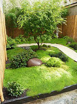 Jardin japonais erable du japon bambous foug res for Cailloux jardin japonais