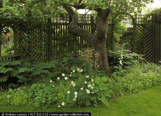 herbaceas debajo de un arbol - Buscar con Google