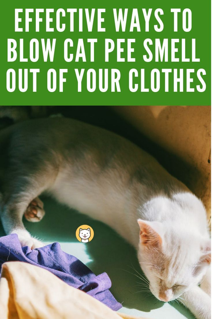 Effective Ways To Blow Cat Pee Smell Out Of Your Clothes Cat Pee Smell Pee Smell Cat Pee Smell Removal