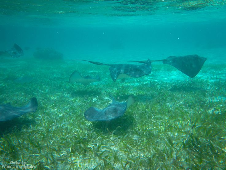 Snorkeling in the Caye Caulker Marine Reserve, Belize | Diaries of a Wandering Lobster