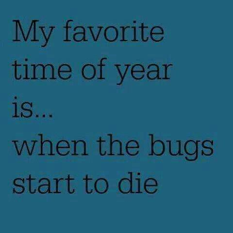My favorite time of year is...when the bugs start to die.