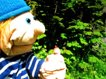 A bird in the hand is worth two in the bush.  Mr. Albert a Little Gem Puppet has got one bird in the hand so he's not even going to look in the bush!