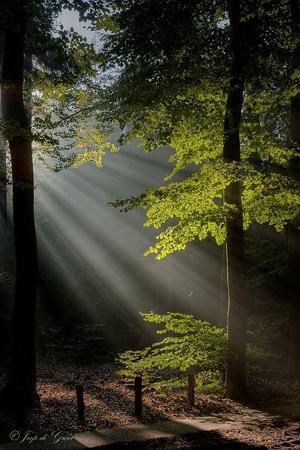 : Ears Mornings, Sun Ray, Trav'Lin Lights, Wood, Welcome Parties, Beautiful, Trees, Sunray, Mornings Lights