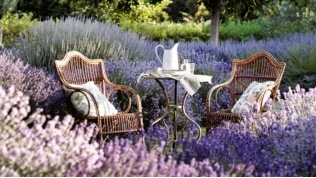 Daylesford is surrounded by beautiful lavender farms where you can sit and relax, and sit, and relax...