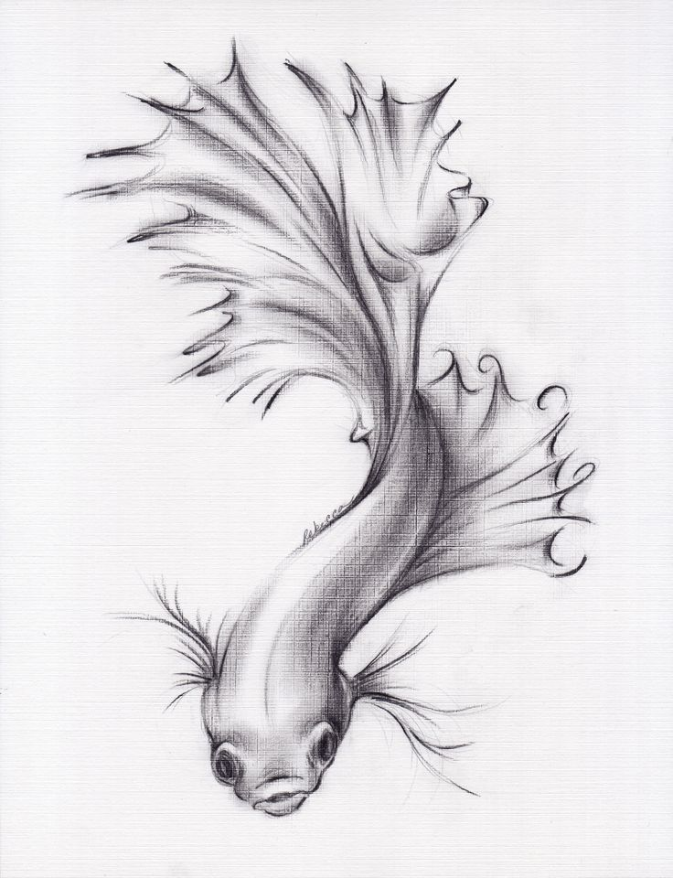 Items similar to Lady of the Lake - Original Charcoal Pencil Drawing of a Siamese/Betta Fighting Fish on Etsy