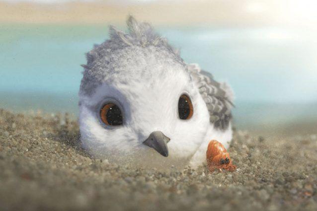 film animasi 'piper'