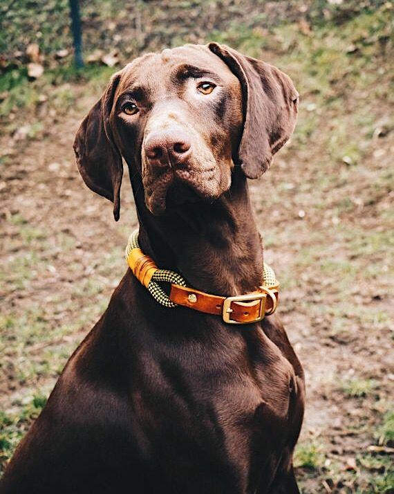 Verstellbares Halsband aus Kletterseil mit Adapter aus vegetabil gegerbtem Leder in Cognac von Pawsome Hundezubehör 😍