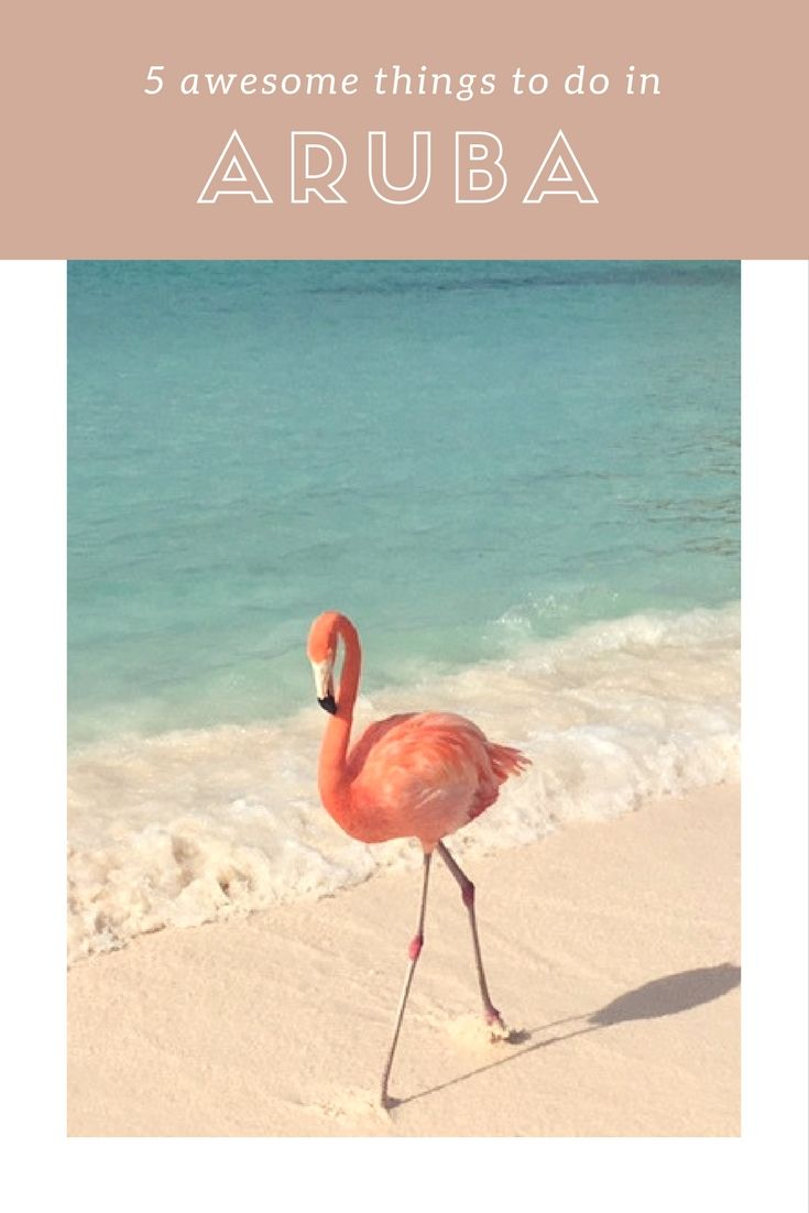 Feed a flamingo? Dine with fishermen? We reveal our top 5 things to do on the beautiful island of Aruba.