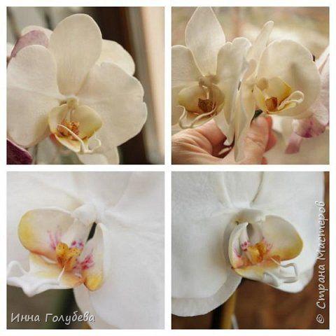 Наконец- то исполнилась моя давняя мечта- освоить фаленопсис! И хоть есть еще над чем работать,но,надеюсь,что я стала намного ближе к цели) Пока налепила цветы,оформлять в ветку буду позже,когда прийдет вайнер листика фаленопсиса. И как всегда,делюсь с вами моим скромным опытом по созданию этого цветочка)  фото 19