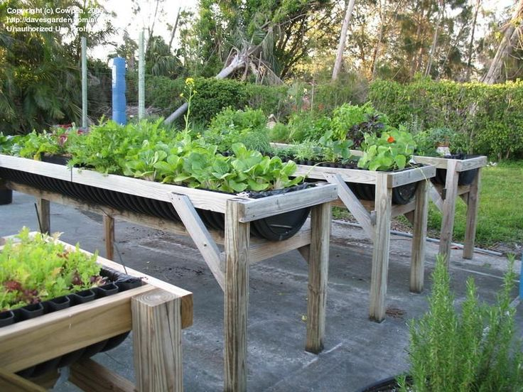 Wheelchair Gardening Raised Beds. See It. Believe It. Watch Thousands Of  SCI Videos