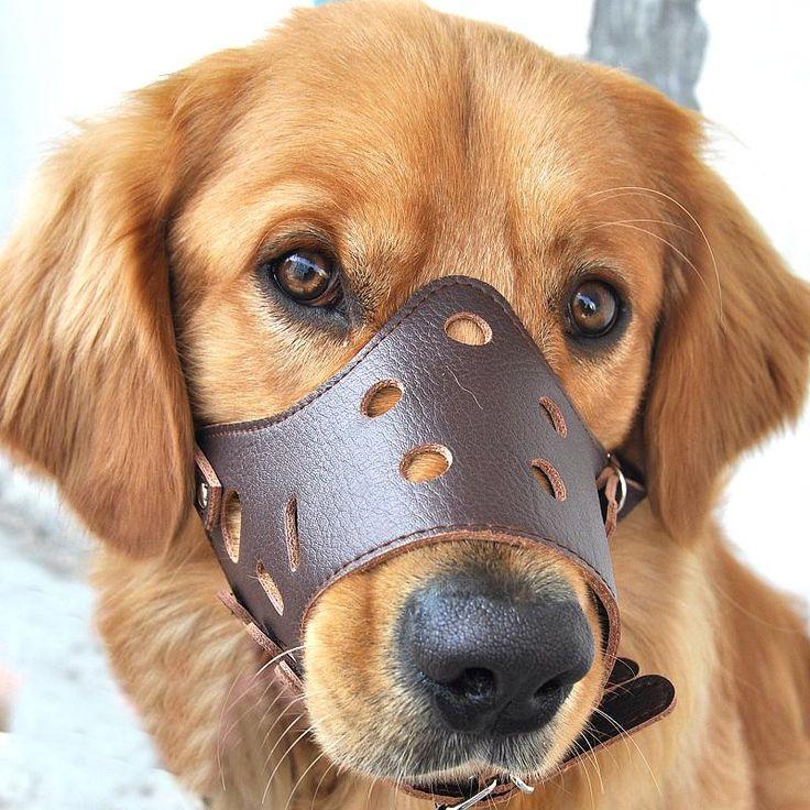 Nett Draht Fuchs Terrier Rettung Midwest Fotos - Der Schaltplan ...