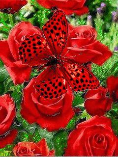 Розы и бабочка