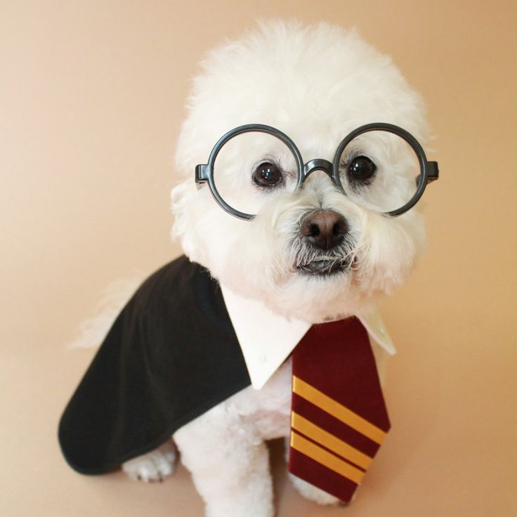 17 Harry Potter Names Perfect for Your Magical Pet