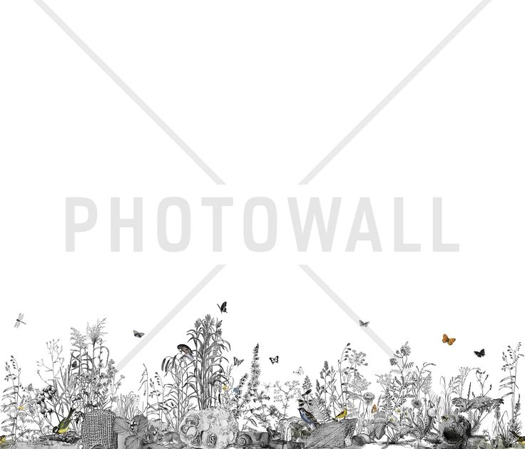 Snail Trail - Wall Mural & Photo Wallpaper - Photowall