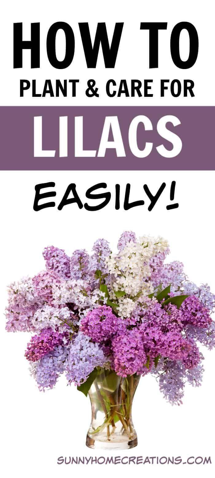 Wie Man Leicht Schone Flieder Zuchtet Flieder Leicht Man Schone Wie Zuchtet In February In 2020 Beautiful Flowers Garden Lilac Bushes Gardening For Beginners