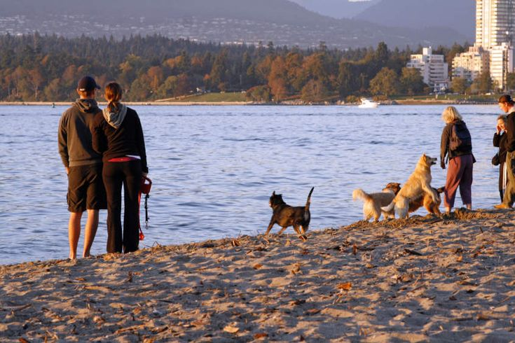 249 Best Traveling With Pets Images On Pinterest