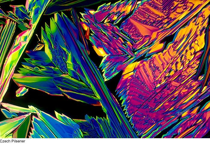 Băuturi alcoolice sub microscop | VICE