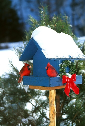 Cardinals Bird Feeders And Painted Birds On Pinterest