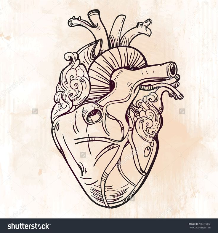 Heart Tattoo Line Drawing : The best anatomical heart tattoos ideas on pinterest