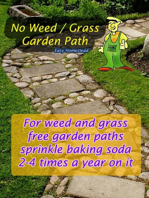 Weed and grass killer. Spread baking soda on it 2-4 times a year.