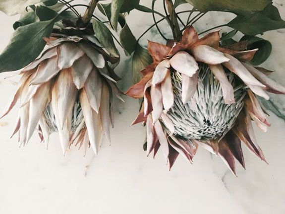 Friday Finds Sfgirlbybay Protea Flower Dried Flower Bouquet Dried Flowers