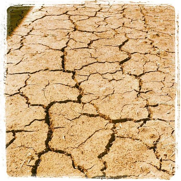 #Sequía. Visto en #Perafort #Tarragona