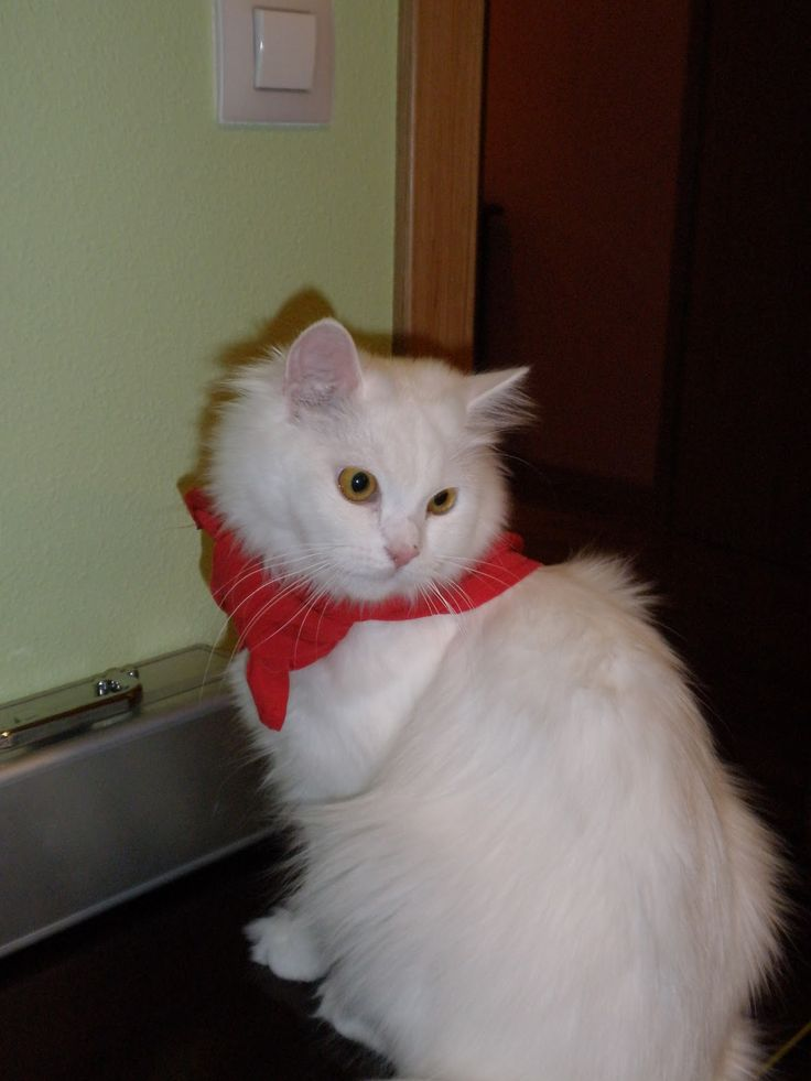Hipoteca de un mileurista: Gatos blancos