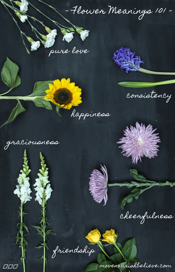 Flower Meanings Decoded The Secrets Of Your Favourite Bloom Move Nourish Believe Flower Meanings Flowers Flower Arrangements